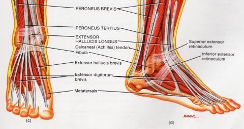 Valu jalgsi liigestes tombas mu ola valus liigese