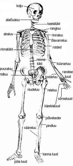 Sore liigesed skelettil kust liigesed voivad 17. aasta jooksul haiget teha