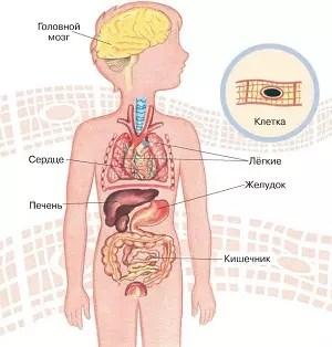 Mazne liigeste ravi haavandid suus ja liigesevalu