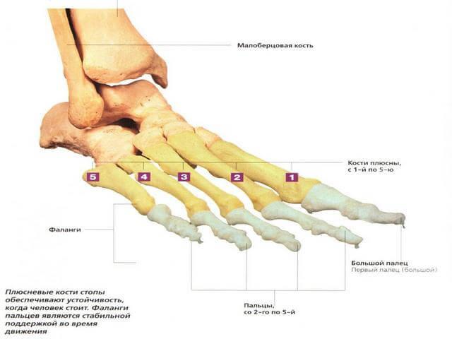 Folk oiguskaitsevahendeid artroosi ravi