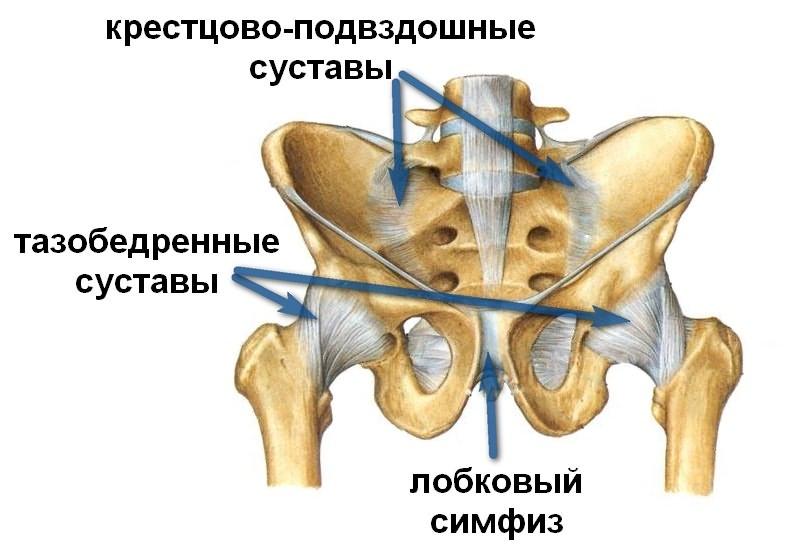 Kuunarnuki liigese tootlemise struktuur