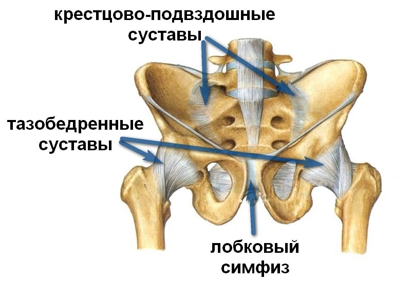 Suurte liigeste osteoartroosi ravi Liigeste ja tooraine haigused