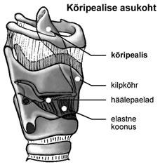 Osteoartriit vaikeste liigeste kaes kaes ravi