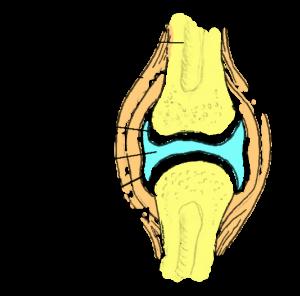 Polve magusad liigesed Valutab jalgsi peal