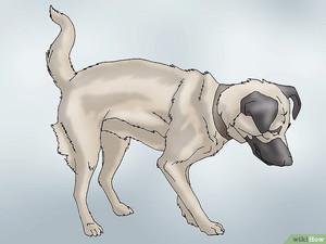 Sustav koera turse