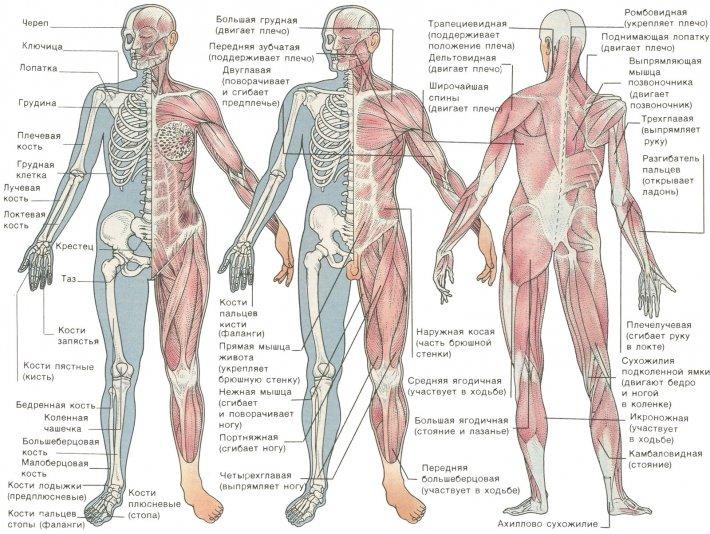 Valu lihaste ja puusaliidete valu Kasvaja liigeste poletik