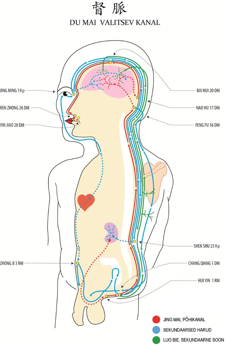 Valu randamine suurte liigestega Long turse liigese