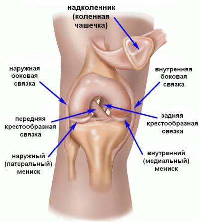Salv liigeste ligamentide jaoks