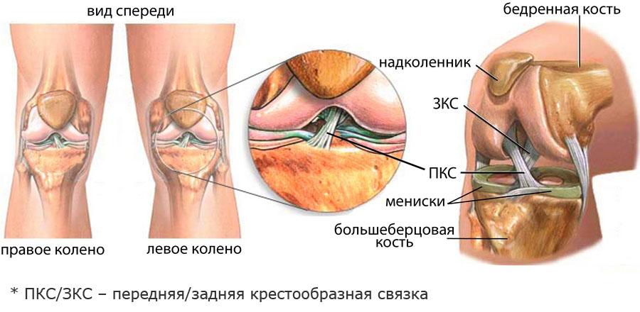 Geranium liigeste raviks