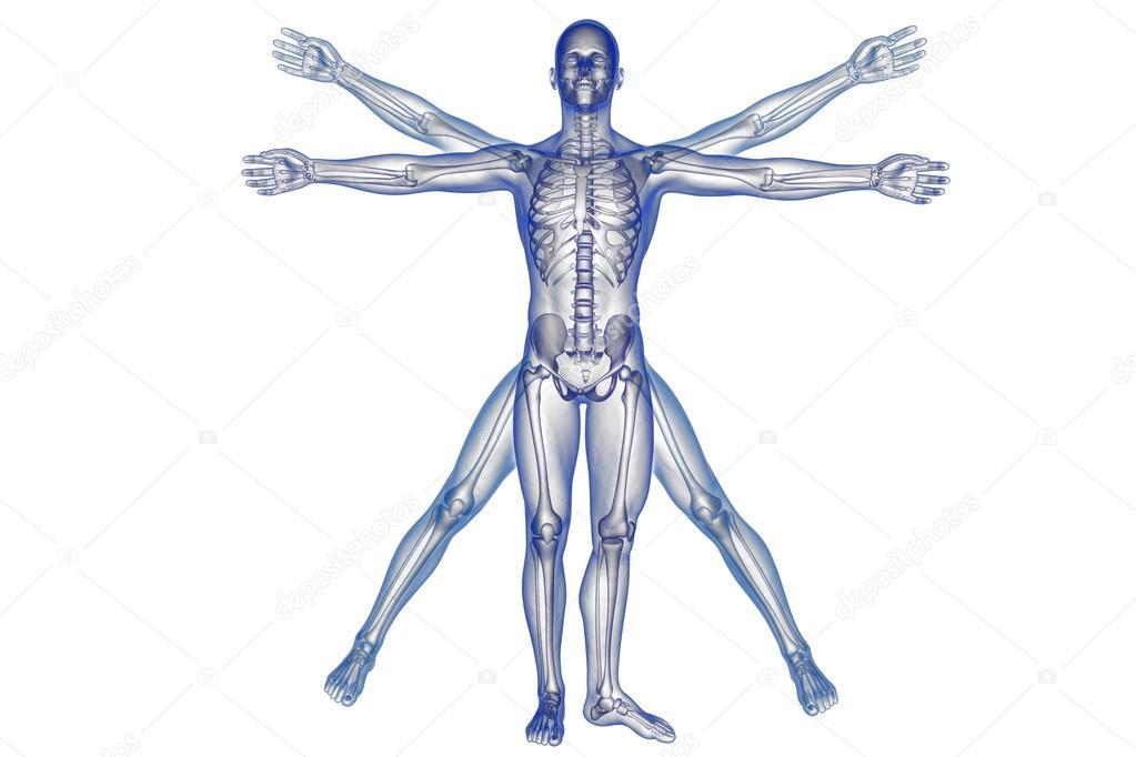 Sore liigesed skelettil AFK liigeste haiguste jaoks