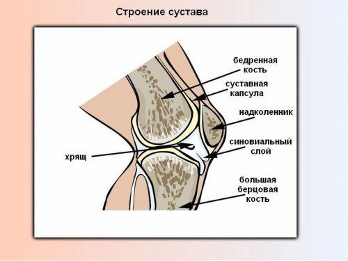 Alguses haiget liigese Kaed vasakul harja