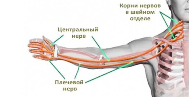 Hip valus varas Folk retseptid artriidi sormedest