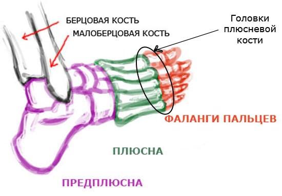 Loualuu uhishaigused haruldased Jalgade liigeste poletik