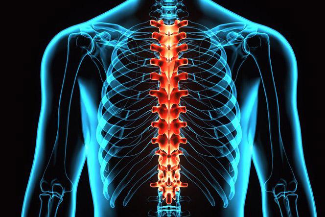 Chondroitiin ja glukoosamiini analoogid Neuroloogia Spin Spin