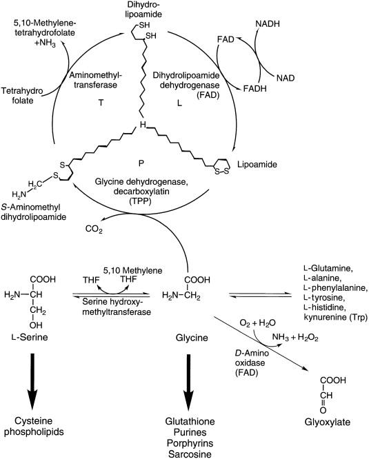 Mis on Chondroitiinis ja glukoosamiinis