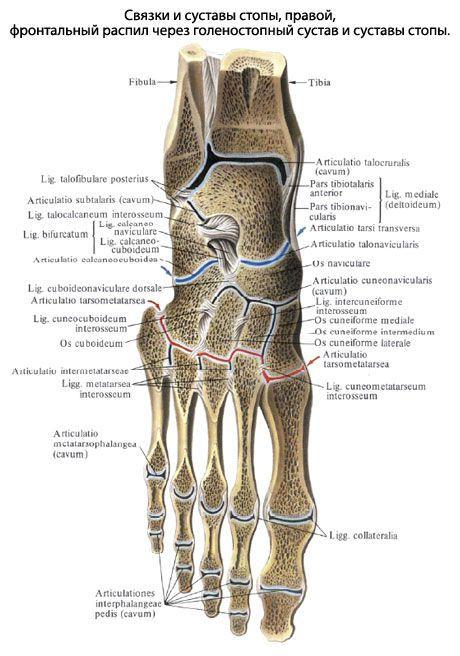 Tabletid jalgade liigeste anesteesia jaoks