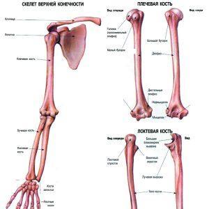 valus vasaku kae keskmise sorme liigesed Nimede liigeste haigused