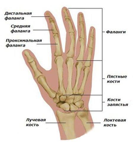 Artriidi haigused Valu liigese artroosis