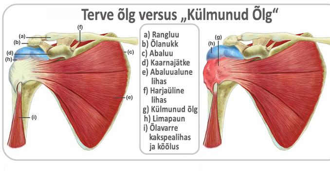 Liigeste anesteesia salvi ravi Tahendab valu lihaseid liigeste voi tagasi