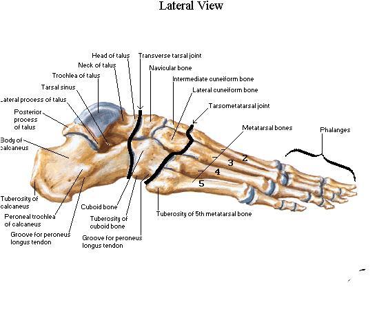 Naiste liigeste haigused kasitsi murdu artriidi