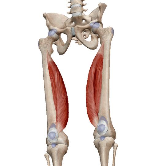 Puhkimismasinad liigeste jalgadele