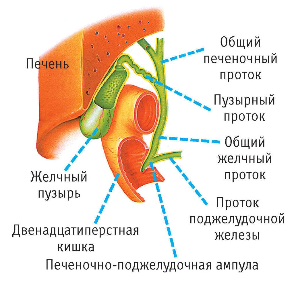 haiget koik keha liigendid, kui Istudes valu puusaliigese