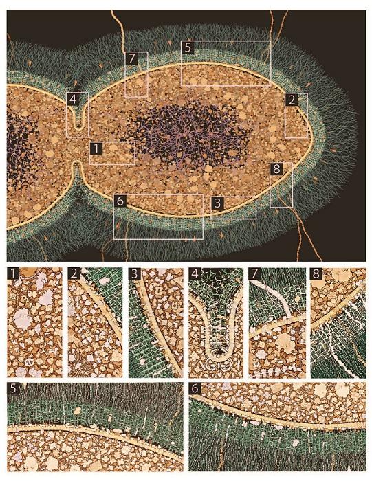 Streptococcus Sustavi poletik